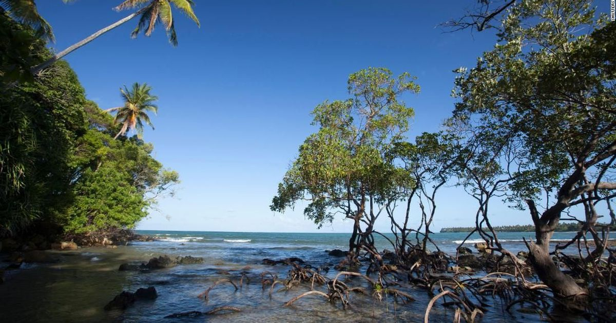 Brazil revokes mangrove protections, weakening another ecosystem key to curbing climate change