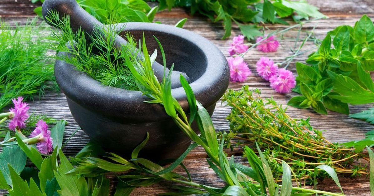 Фото Семь лучших трав для ваших блюд