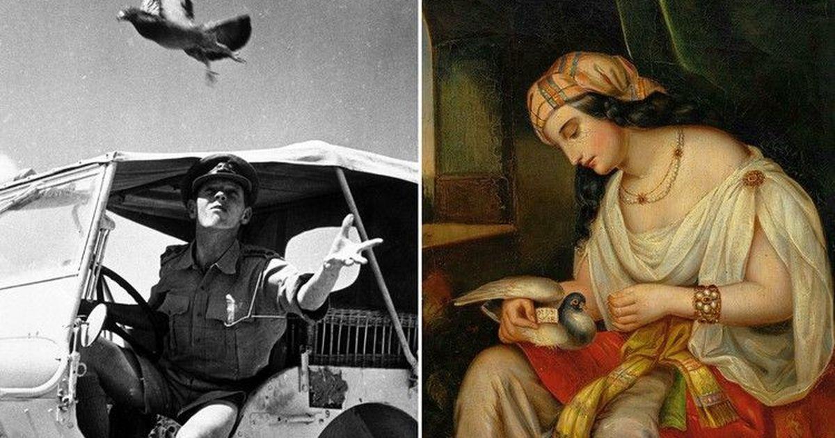 Фото Откуда почтовым голубям известно, куда доставить письма
