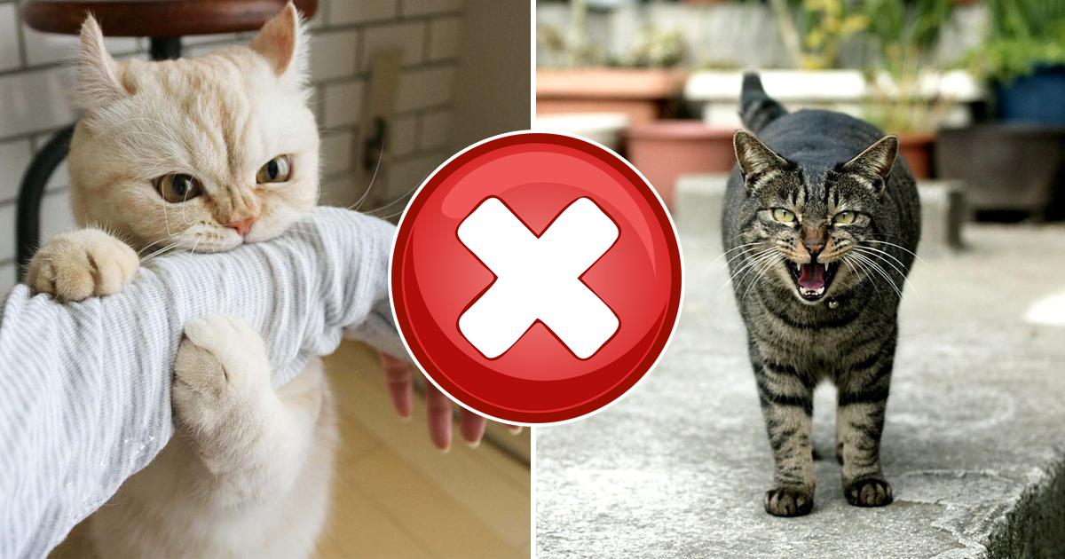 Фото 7 сигналов, что ваша кошка тайно вас ненавидит