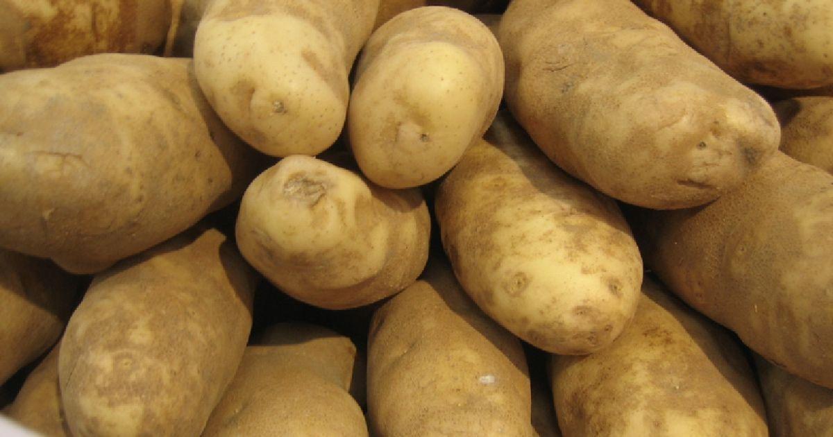 Фото Шведский студент создал из картофеля экологичную альтернативу пластику