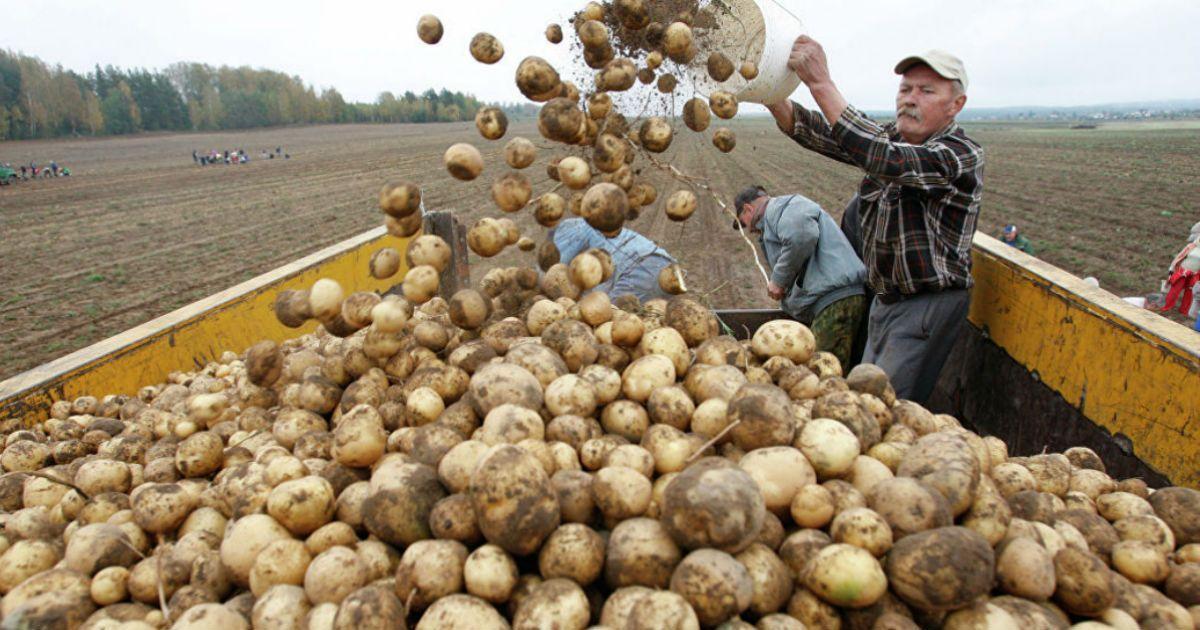 Фото Наглая ложь и статистика. Сельскохозяйственный бум в России оказался выдумкой