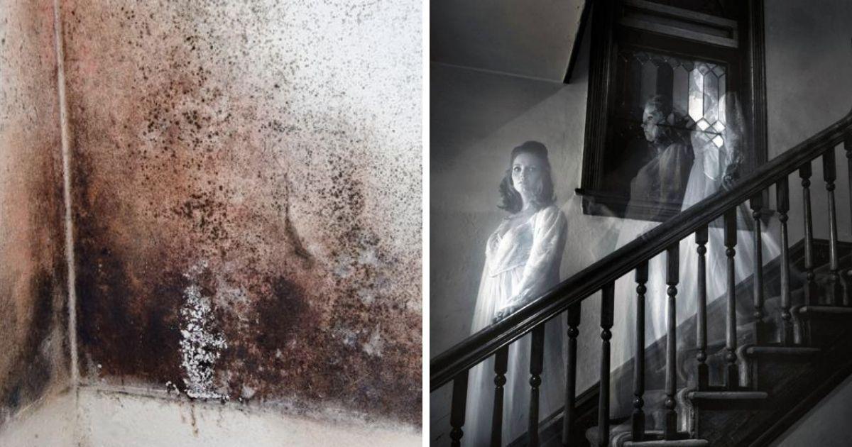 Фото Призраков не существует. Плесень у вас дома может вызывать галлюцинации