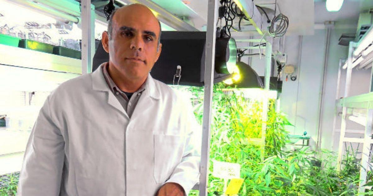 """Фото Ученый из Испании создал первую в мире """"легальную"""" марихуану"""