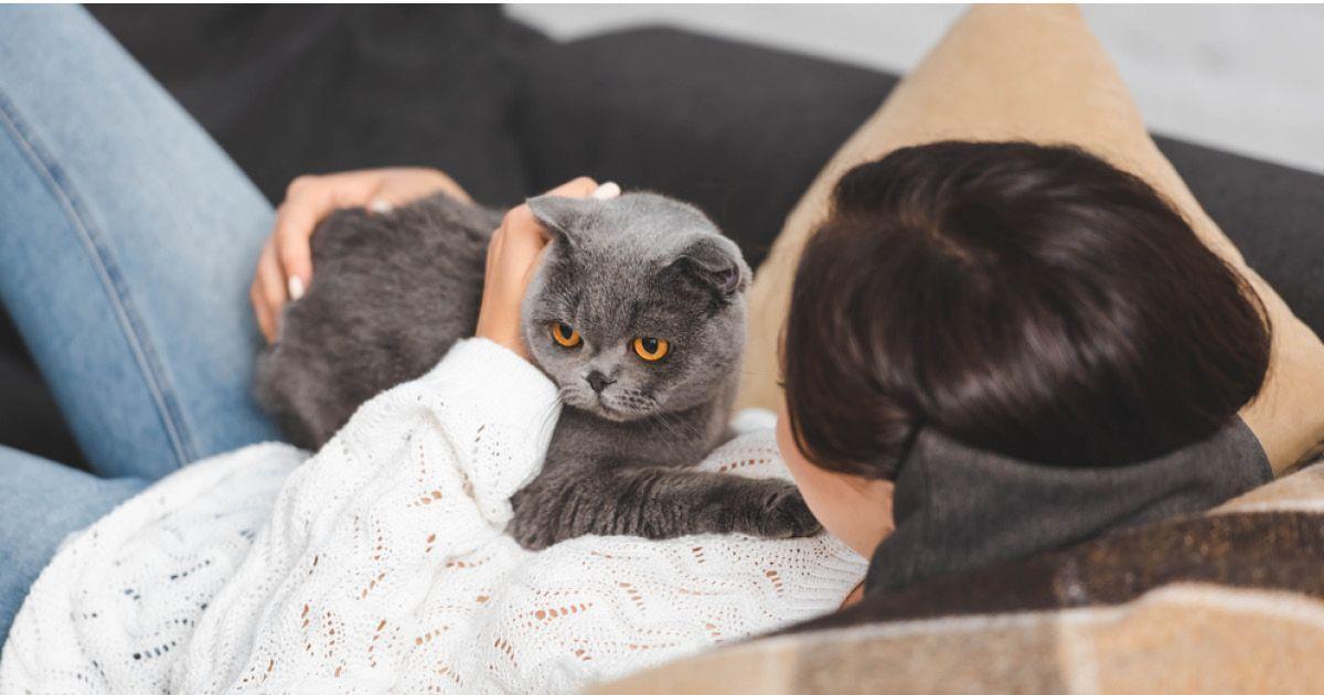 Фото Кошка, которая гуляет сама по себе: можно ли считать котов эгоистами?
