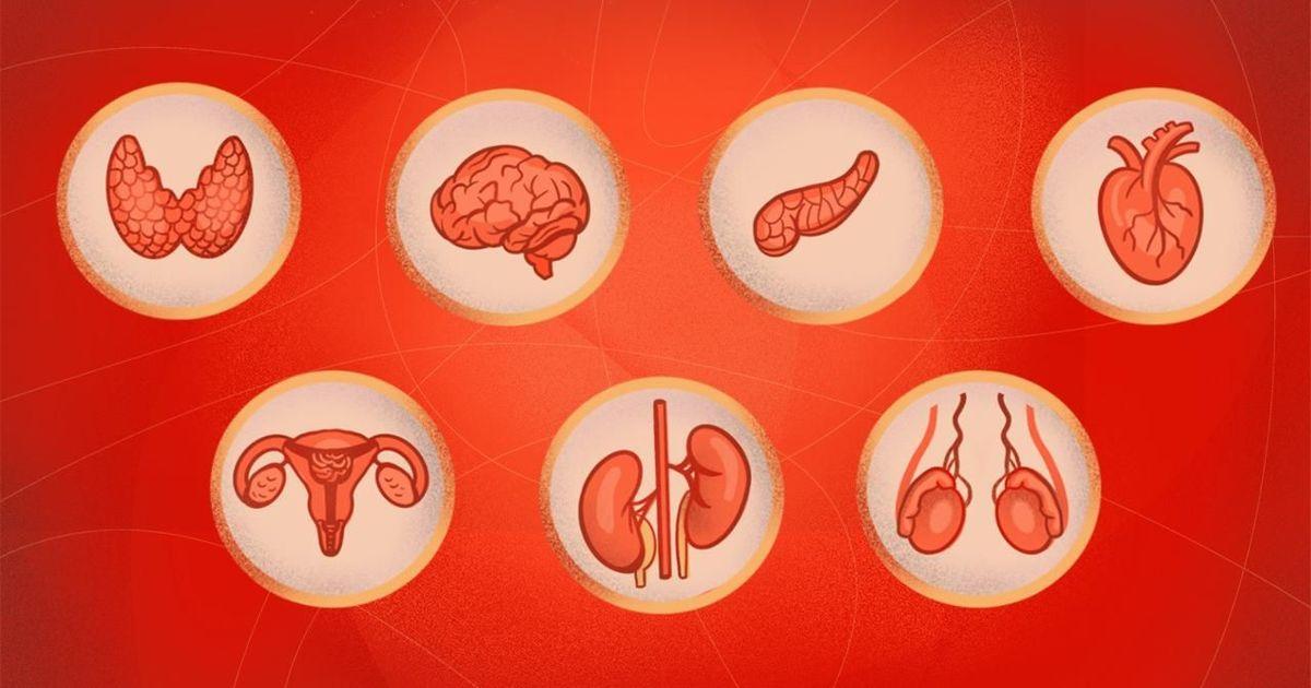 Фото Неэтичная наука: тест об истории изучения гормонов