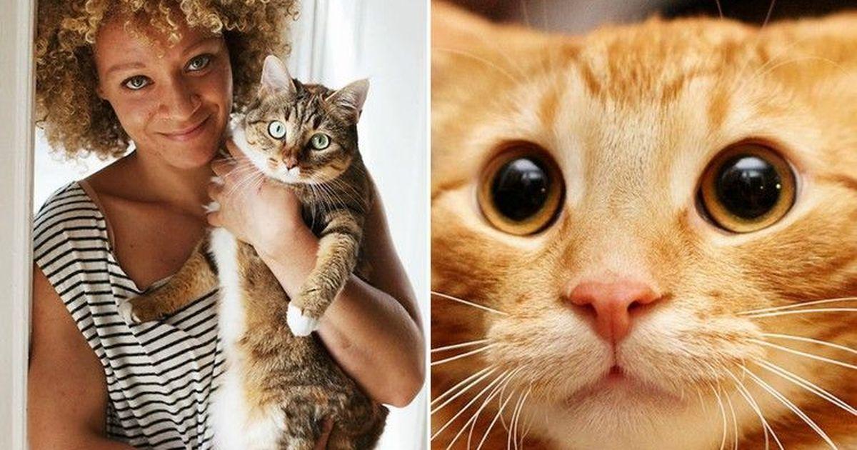 Фото Доказано наукой: веские причины завести кота