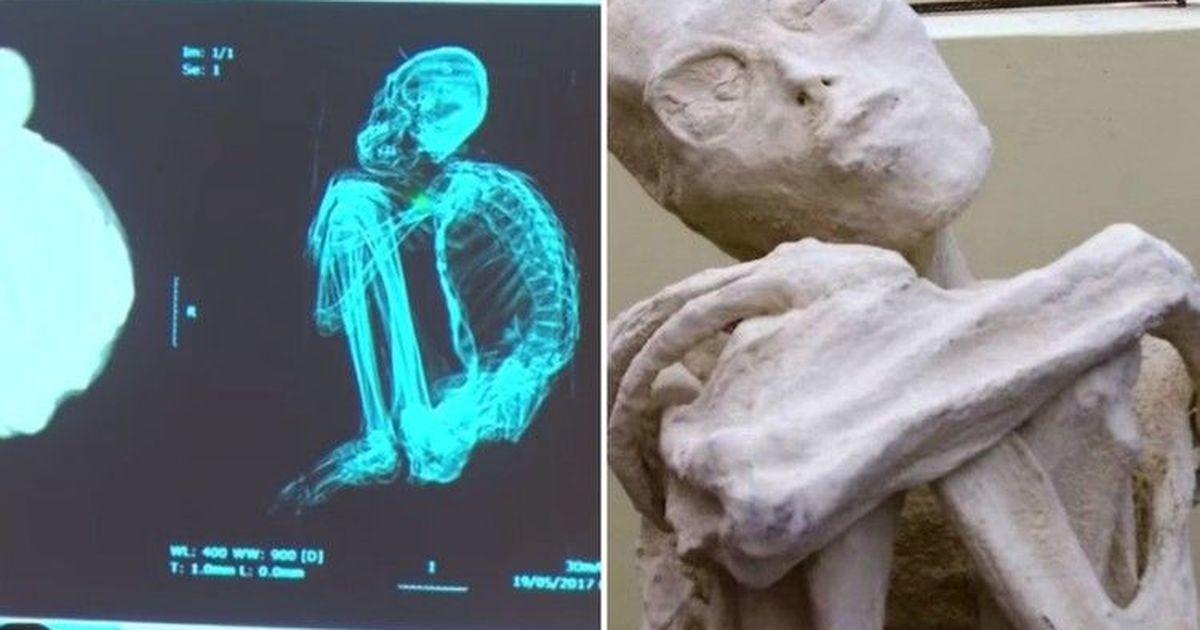 Фото Реальность или мистификация? В Перу обнаружены скелеты пришельцев