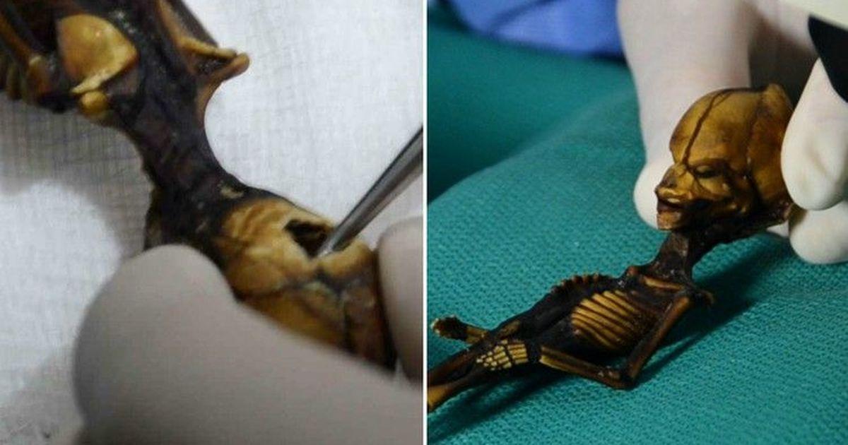 Фото Анализ ДНК раскрыл трагическую тайну маленького