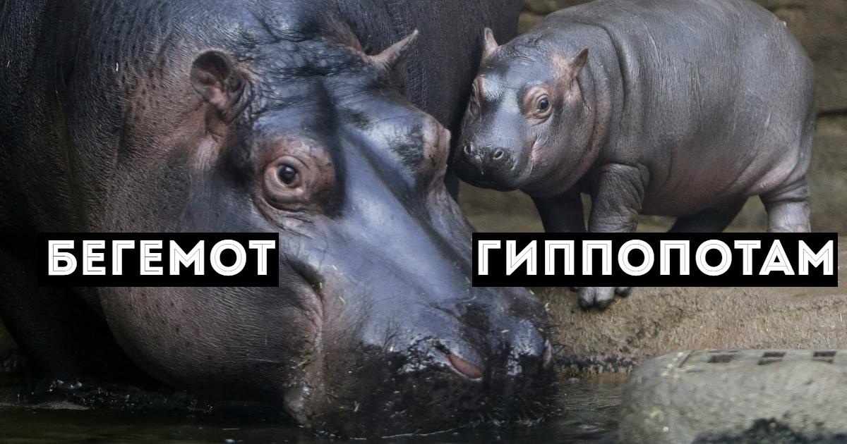 Фото Что такое синонимы: примеры синонимов