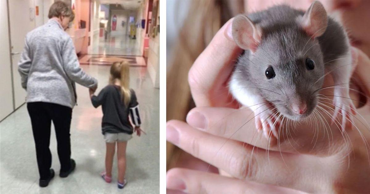 Фото Девочку заразили смертельно опасной болезнью ручные крысы