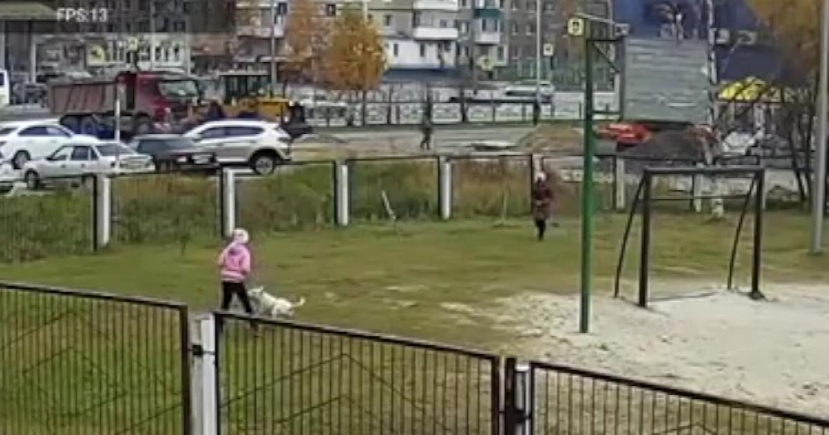 Фото Вышла на продлёнку: бультерьер напал на девочку во дворе школы
