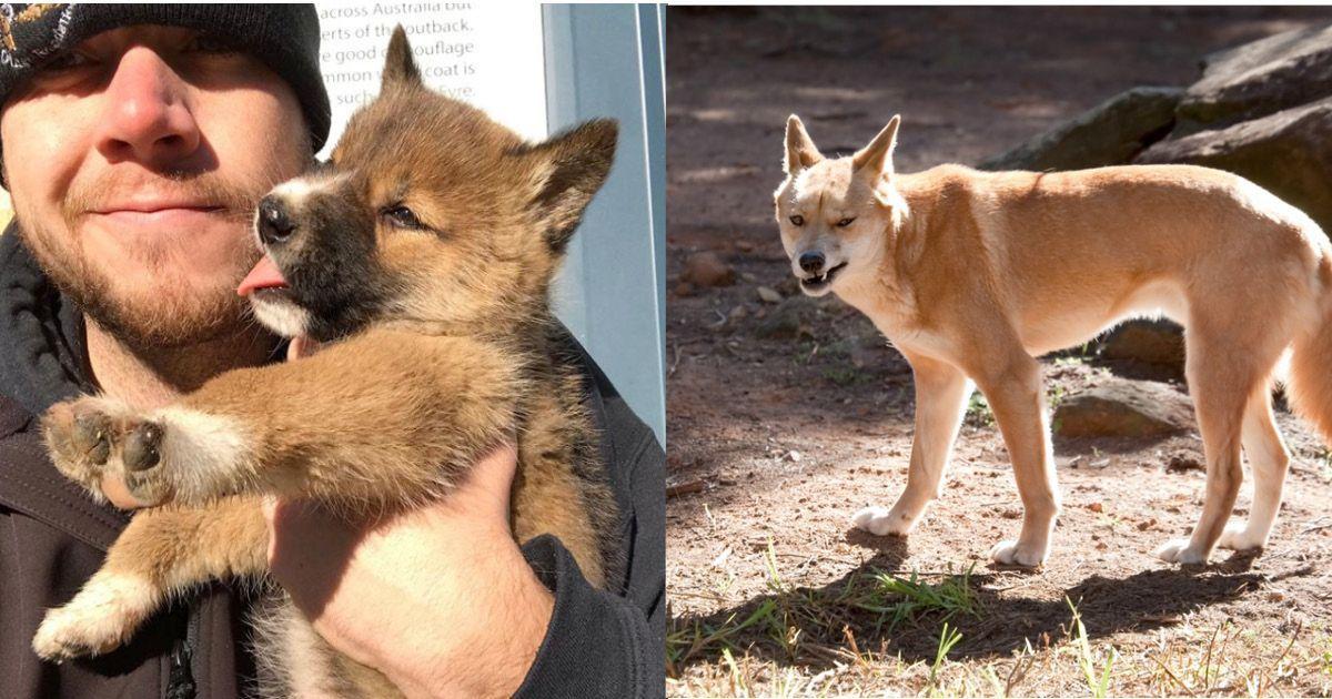 Фото Чудесный щенок, обнаруженный во дворе дома, оказался диким зверем