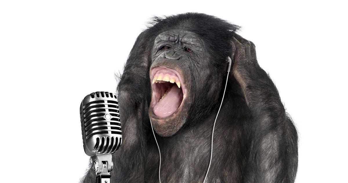 Фото Шимпанзе-рок. Ученые обнаружили, что приматы могут сочинять музыку