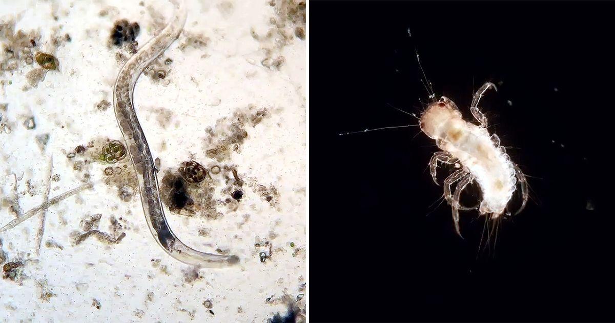 Фото Микро-зоопарк. Как бактерии живут в ваших домах, пока вы их не видите