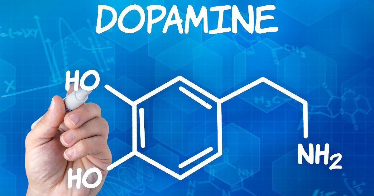 Фото Дофамин - что это? Как повысить дофамин в организме? Для чего нужен гормон дофамин?