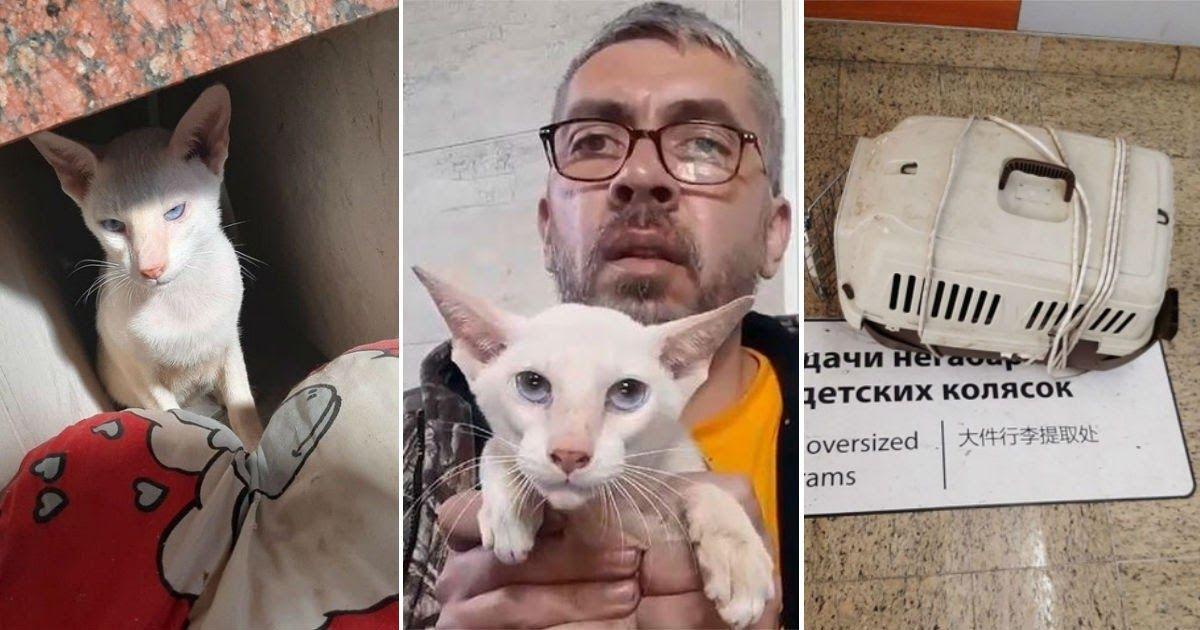 Фото «Аэрофлот» открестился от истории с кошками, которых лишился пассажир