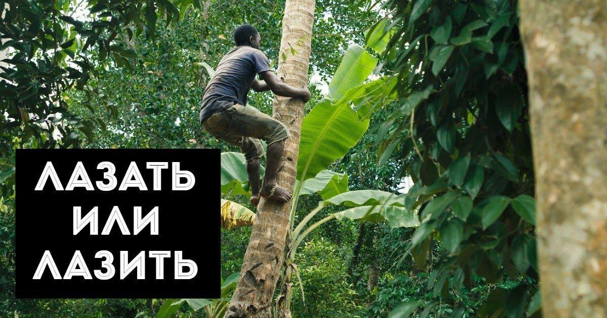 Фото Лазать или лазить - как правильно. Я лажу или я лазаю по деревьям?
