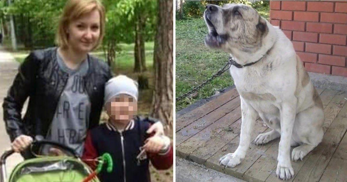 Фото Под Москвой мальчик спас маму, на которую нaбpoсился соседский алабай