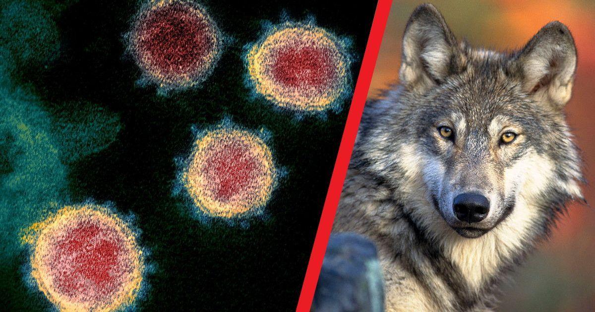 Фото В России обнаружено больше 100 штаммов коронавируса. Что это значит