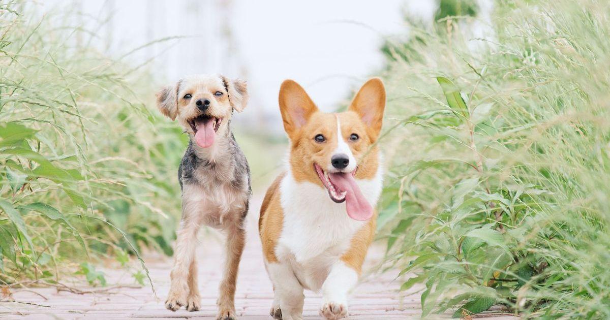 Фото Названы лучшие собаки для горожан