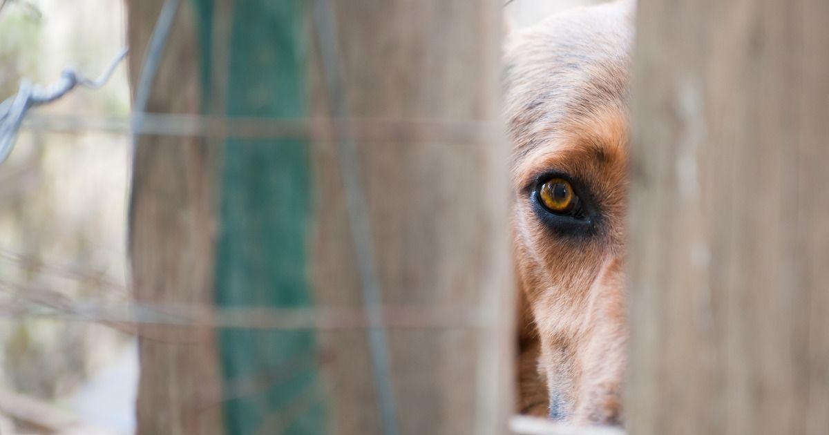 Фото Полиция возбудила уголовное дело против питавшейся собаками пенсионерки