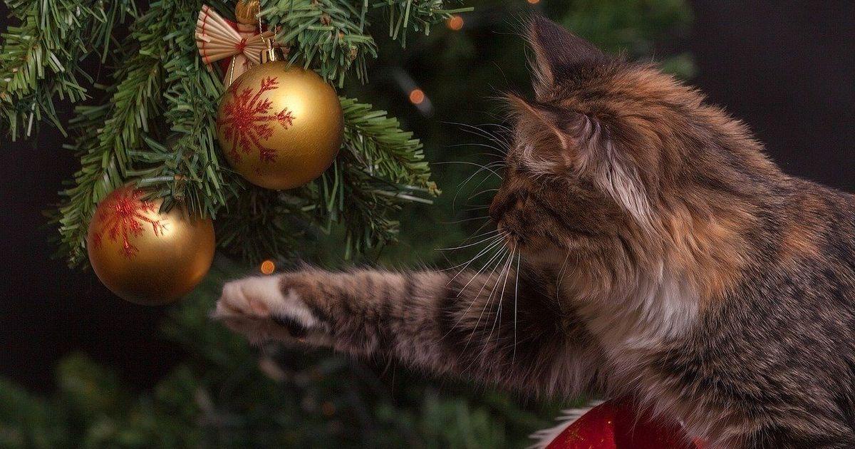 Фото Россияне назвали идеальную продолжительность новогодних каникул