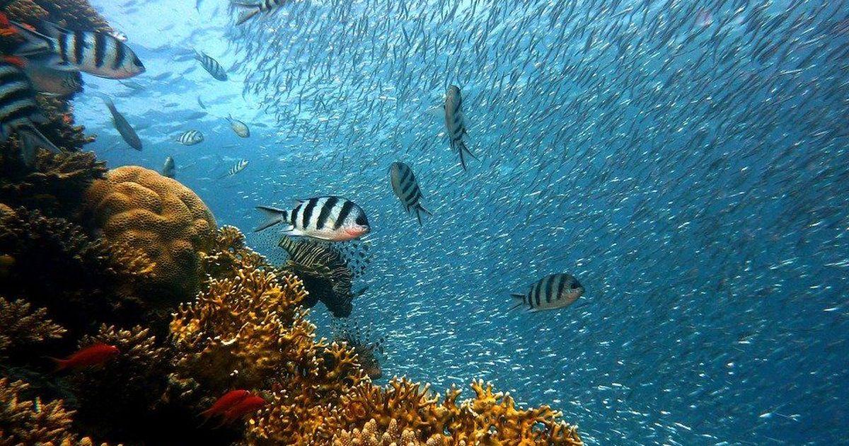Фото Большой барьерный риф лишился половины кораллов